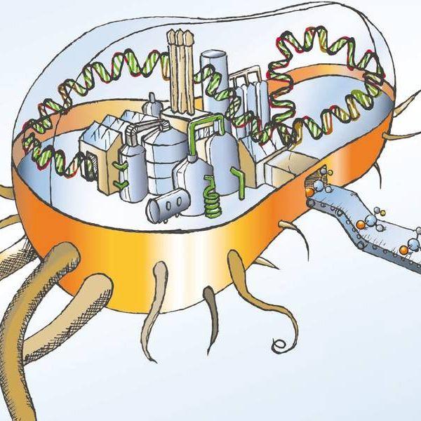 Bakterielle Zellfabriken (Schema)
